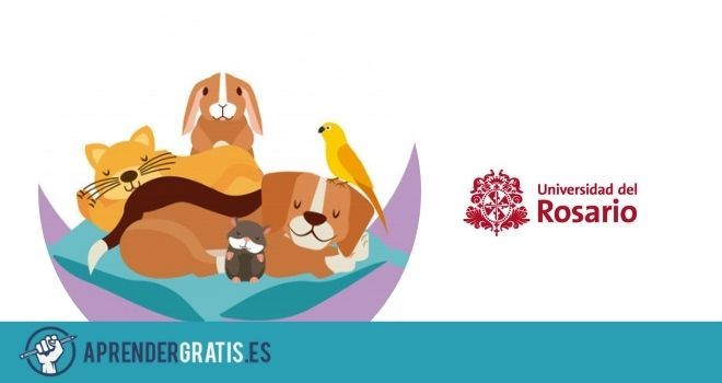 Aprender Gratis   Curso sobre el cuidado y la convivencia con mascotas