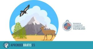 Aprender Gratis | Curso sobre la fauna en Chile