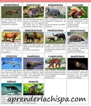 clasificacion-mamiferos2
