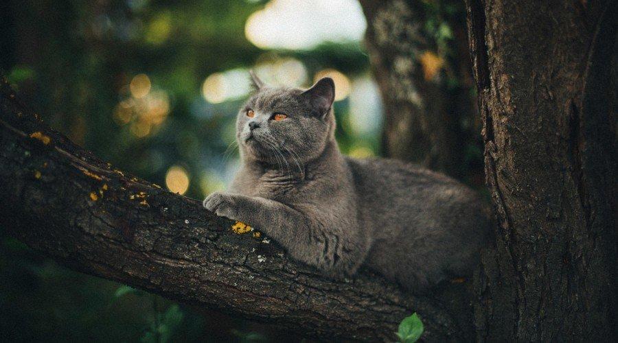 Nomes para Gatos e Gatas e outros animais de estimação A-Z