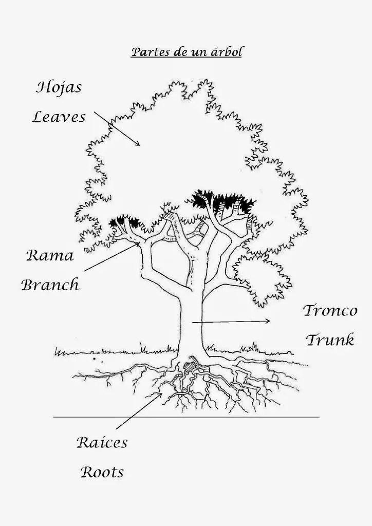 Partes del rbol en espa ol e ingl s aprendiendo con julia for Nombres de arboles en ingles