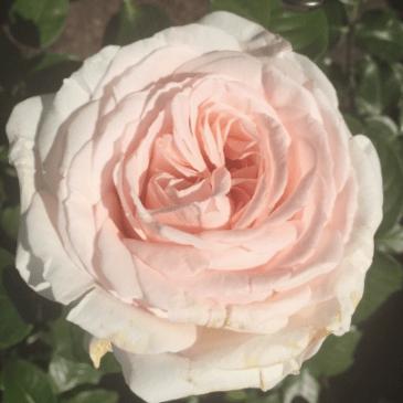 Screen Shot 2018-09-04 at 12.17.18 PM