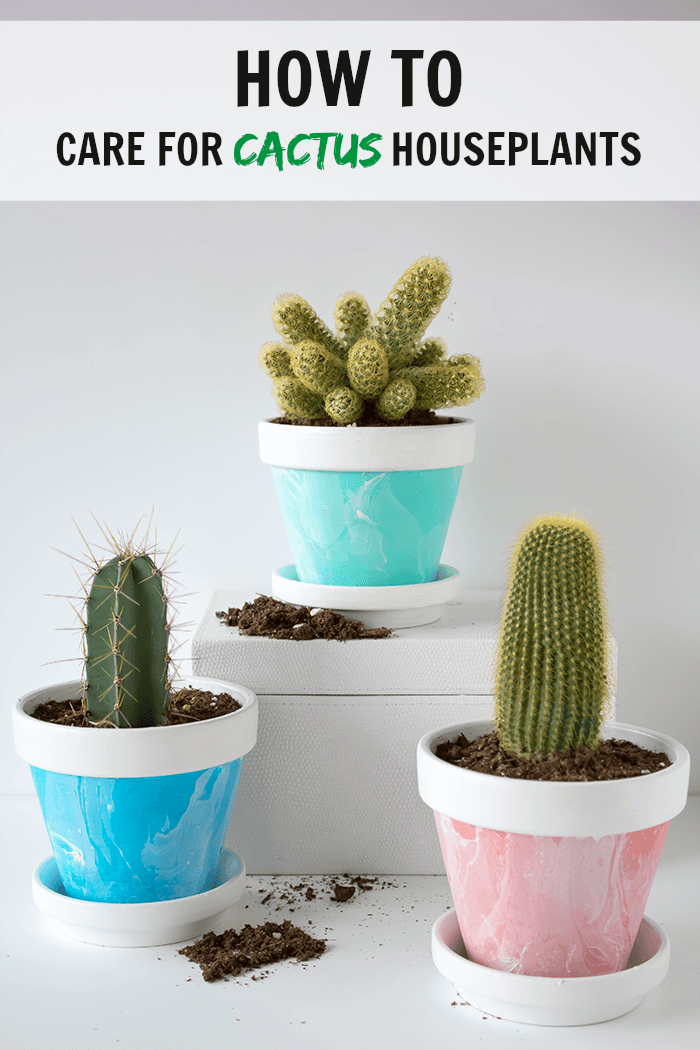 How To Care For Cactus House Plants Indoor Cacti Care