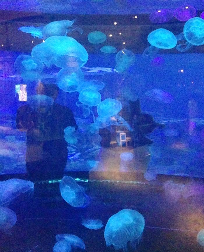 Shark Reef - Las Vegas - Jelly Fish