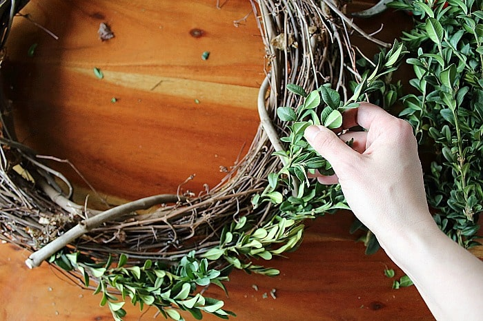 How to Make a Boxwood Wreath - insert clippings.