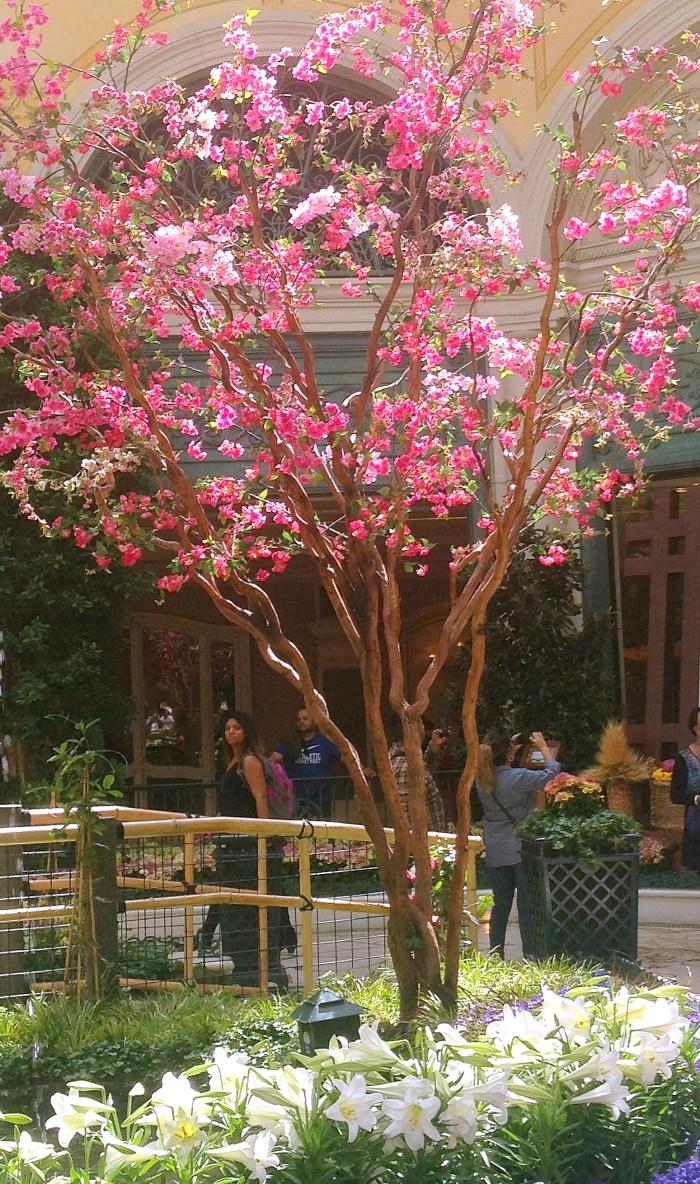 Botanical Garden - Las Vegas - Flowering Tree