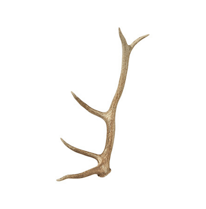 Dream Living Room - Genuine Elk Antler // www.arhaus.com