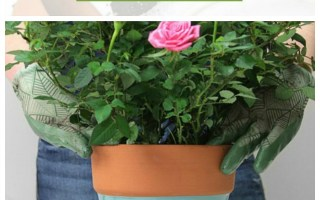 How To Repot A Plant