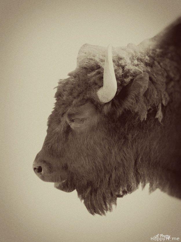 bison_vintage_web