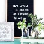 How To Grow Plants From Cuttings A Pretty Life In The Suburbs