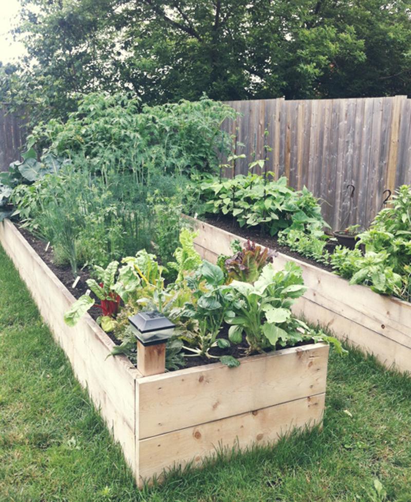 backyard-raised-garden