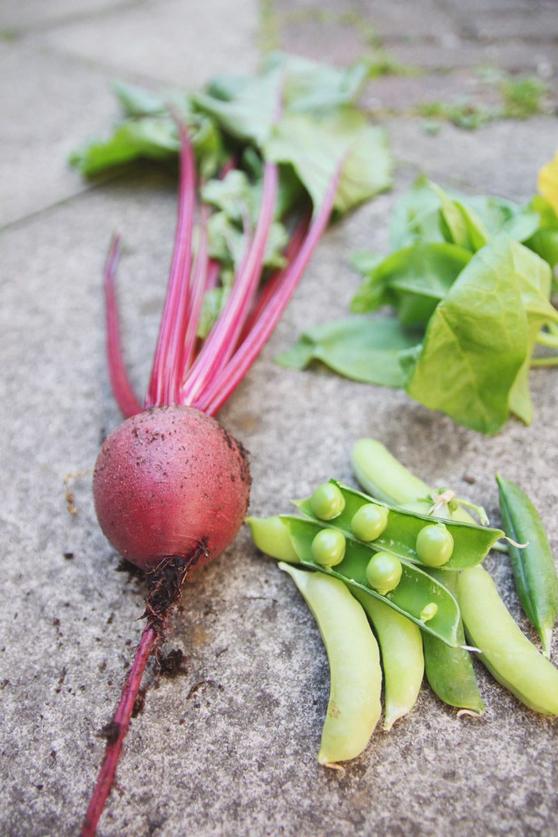June Harvest - Beet, Peas & Spinach