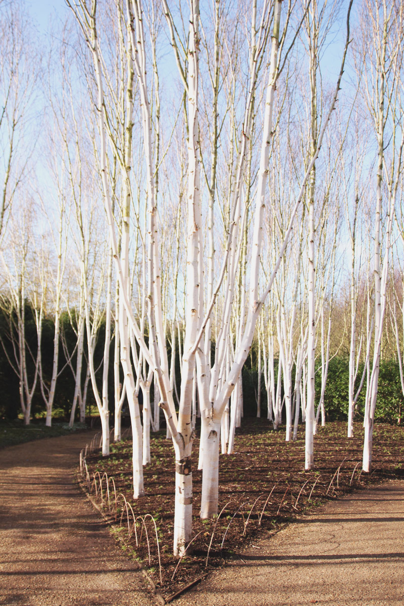 Anglesey Abbey, Winter Gardens