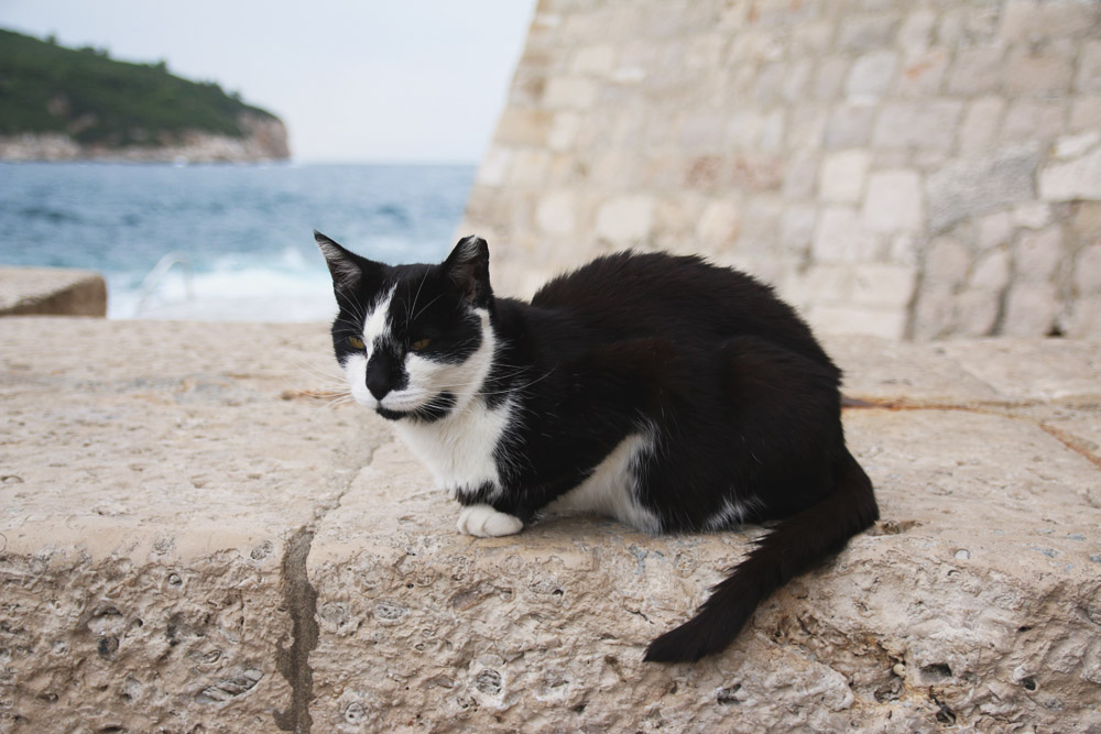 Cats in Old City Dubrovnik