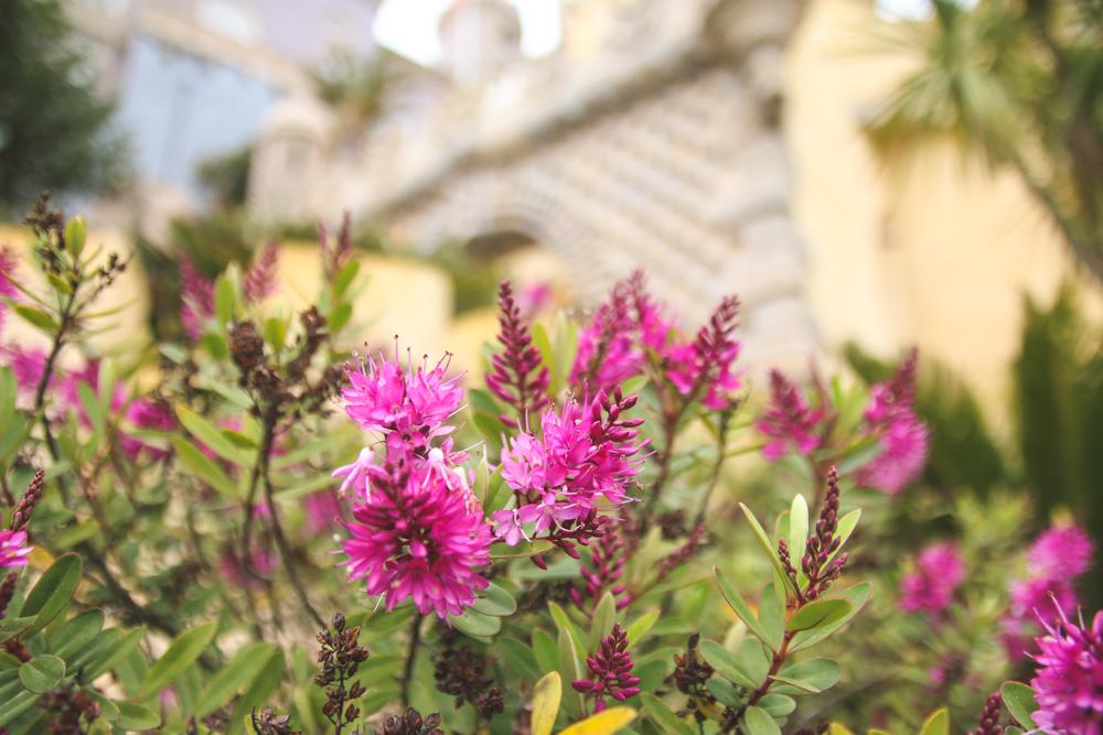 Pena Palace Gardens, Sintra