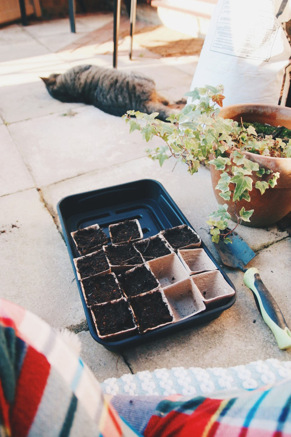 Grow Your Own - 5 Easy to Grow Veggies for Beginners