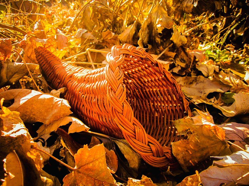Warm photograph of a cornucopia nestled among fall leaves.