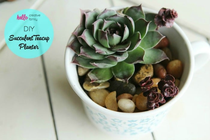 DIY Succulent Teacup Planter from Hello Creative Family