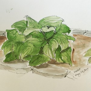 Sketch Choices - Hosta