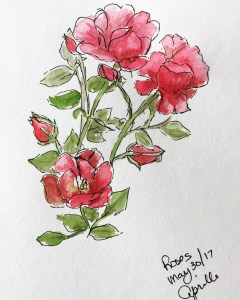 Sketch Choices - Roses