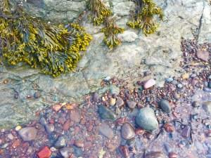 The Tide Pool Wonder