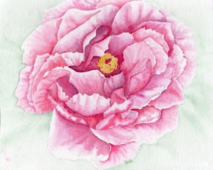 Watercolour Peony, pastel background