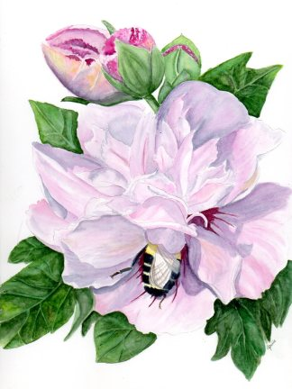 Bee in my Bonnet