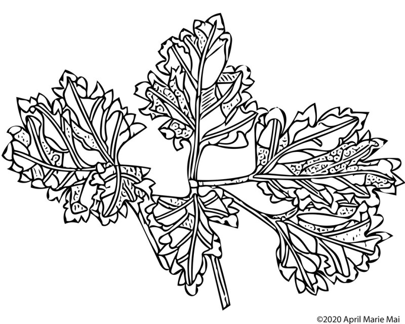 Color Explosion Coloring Page