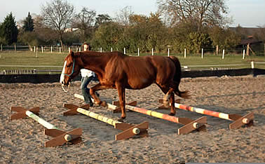 Horse in hand moving nicely over a low set of cavaletti