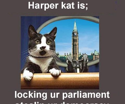 Harper Kat