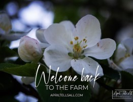 Welcome Back to the Farm