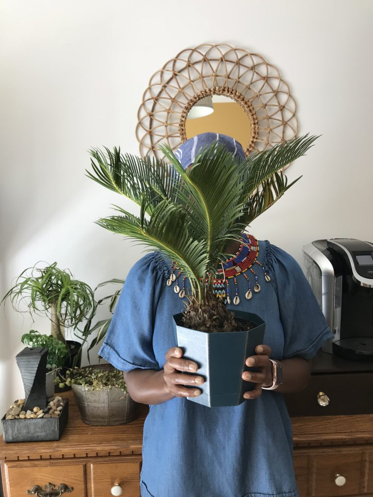 My Favorite Indoor Plants for Fall