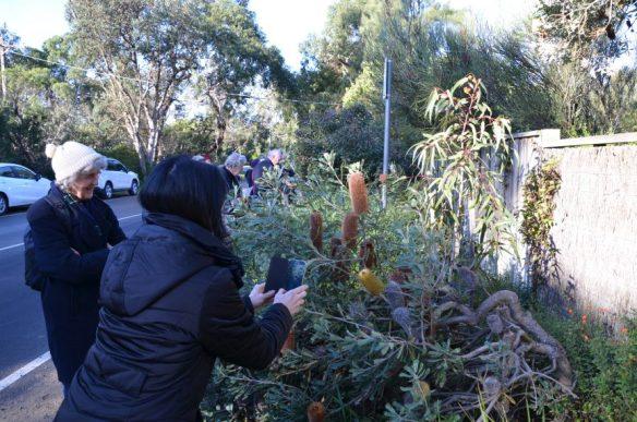 Balnarring garden visit - Photo B. Eaton