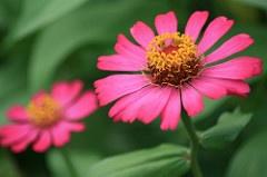 Lovely Pink Flower