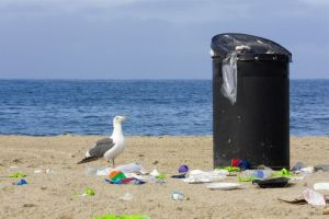 Hidden Beach Cleanup set for July 5, 2016