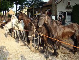 paardenmarkt
