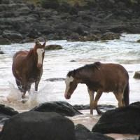 Tres caballos en Anakena