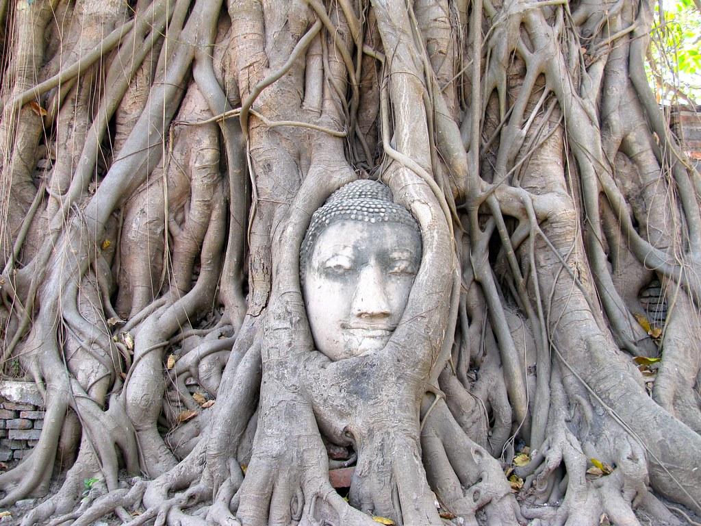 Rostro de Buda en las raíces de un árbol en Wat Maha That