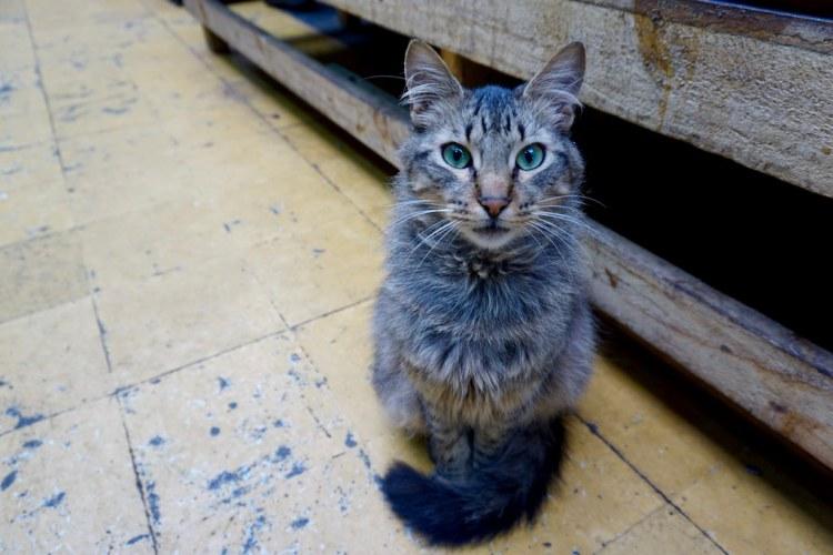 Gato en Mercado Cardonal