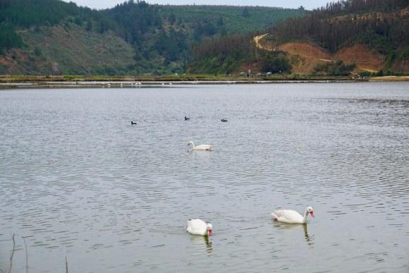 Humedal de Barrancas