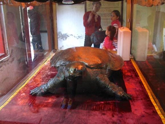 Tortuga Embalsamada en Templo Ngoc Son