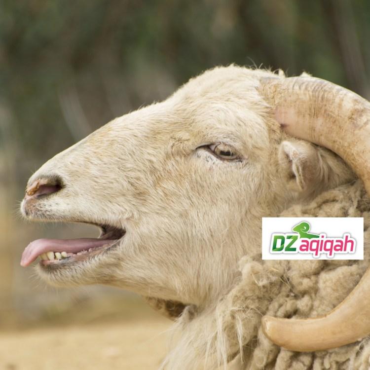 Harga Domba di Purwakarta