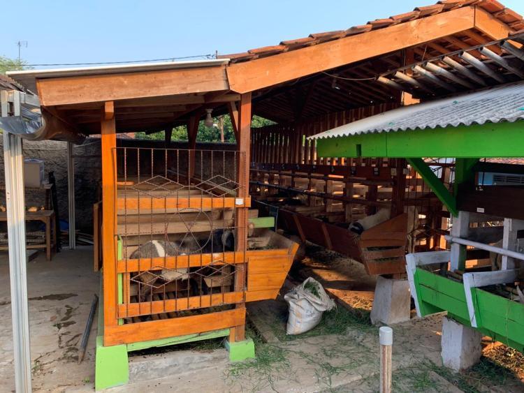 peternakan domba aqiqah dan qurban di purwakarta