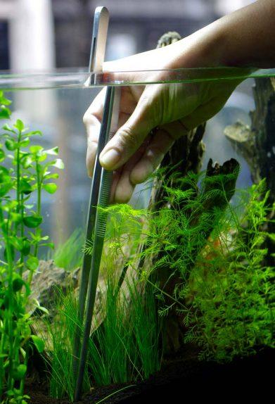 aquatic-design-centre-aquarium-maintenance-services[1]