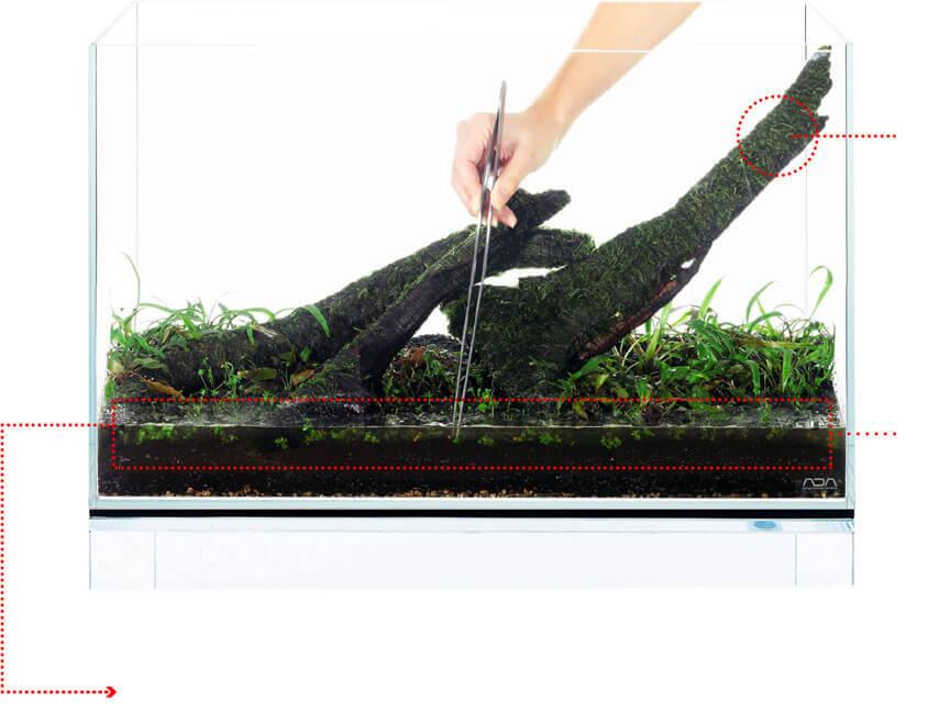 Высадка аквариумных растений переднего плана с помощью пинцета ADA
