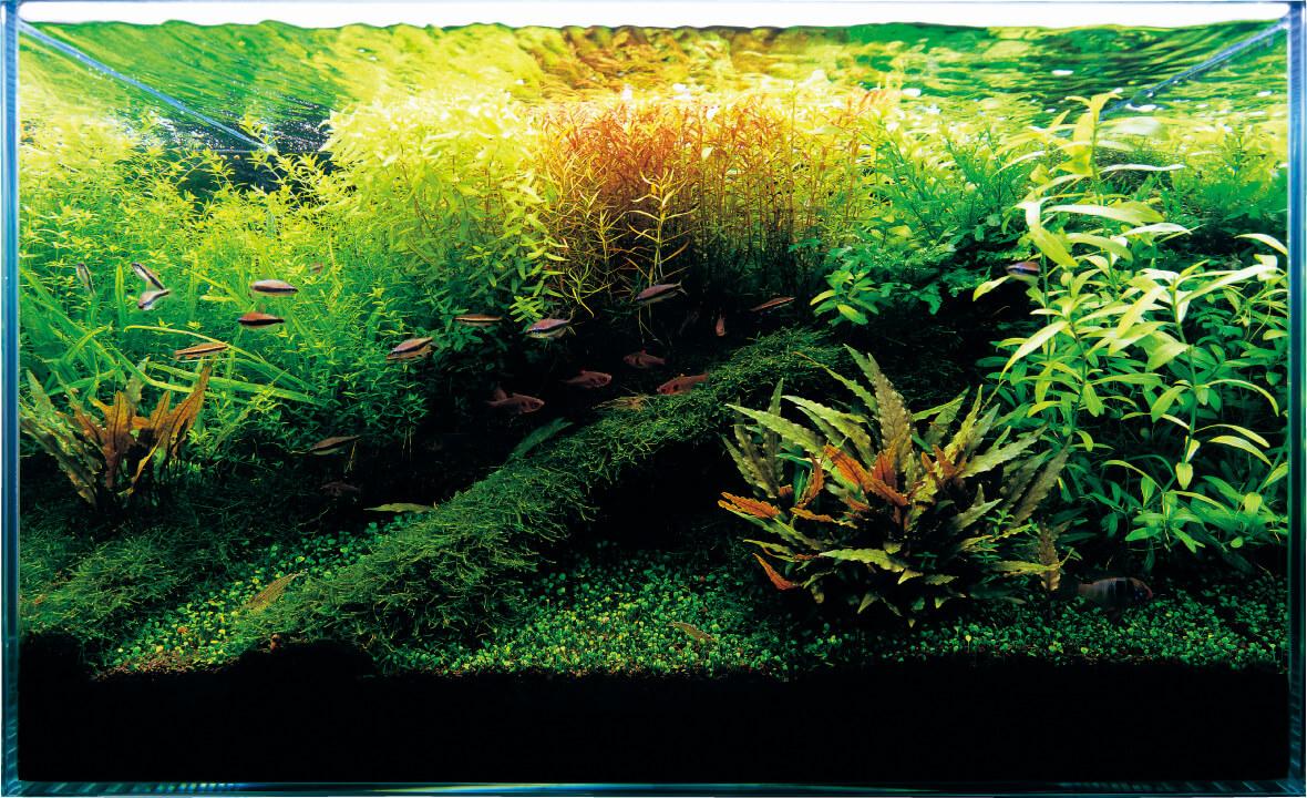 Завершение создания акваскейпа по инструкции Амано