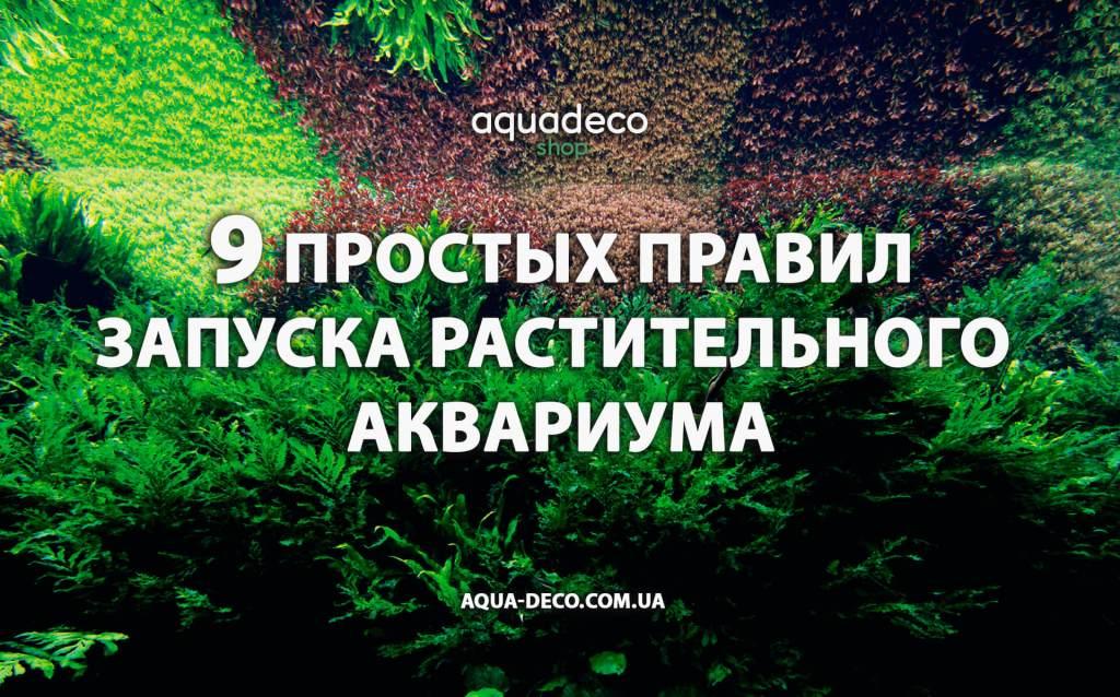 Простые правила запуска аквариума с растениями