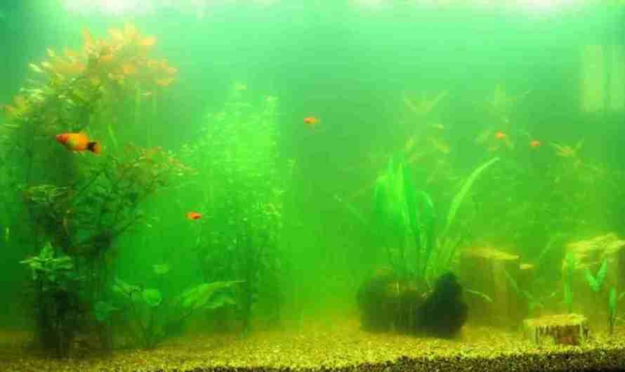 Водоросли в аквариуме. Причины, профилактика, борьба