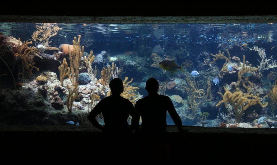 Выбор аквариума для начинающих. Детали на которые необходимо обратить внимание