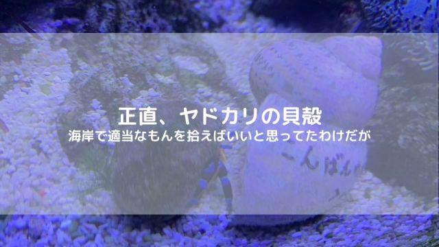 ヤドカリ 貝殻 入手場所